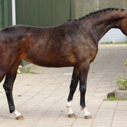 Paard afbeelding